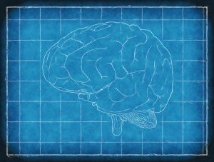 Blueprint brain