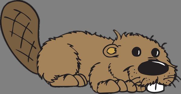 beaver canada